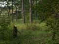 Der Wald in den Dünen